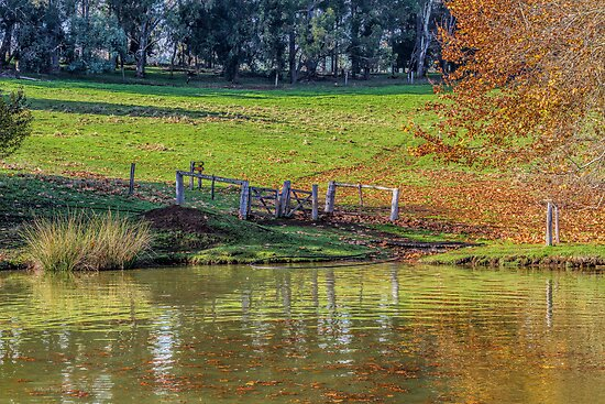 Golden Valley Tree Park, Balingup, Western Australia #8 by Elaine Teague