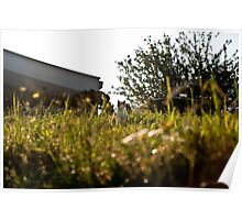 Cat in Long Grass Poster