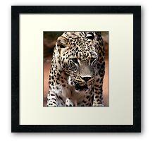 Persian Leopard Framed Print