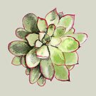 Echeveria by Vicky Webb