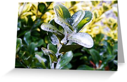 Icy Winter Bush Card