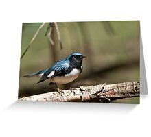 Black Throated Blue Warbler Greeting Card