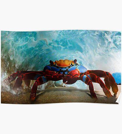 Tube Crab  Poster