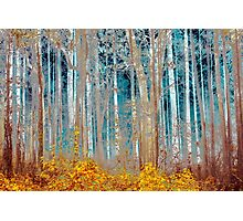 Enchanted Forest Photographic Print
