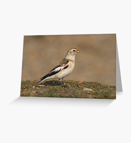 SNOWBUNTING Greeting Card
