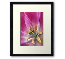 If You Knew a Tulip Framed Print