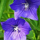Bellflower Beauties by lorilee