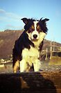 By the seaside with Laddie. by Michael Haslam