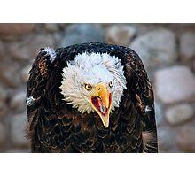 Screeching Bald Eagle Bird Photographic Print