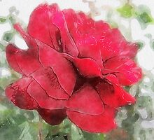 Red Rose Edges Watercolor by Christopher Johnson