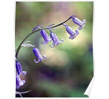 A String of Bluebells Poster