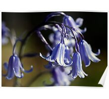 The Bluebell Arch Poster