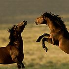 The Wonder of Wild Horses by Kent Keller