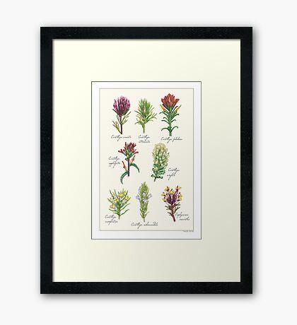 Castilleja wildflowers Framed Print