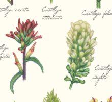 Castilleja wildflowers Sticker