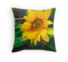 Moist sunflower Throw Pillow