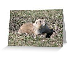 Black Tailed Prairie Dog Greeting Card