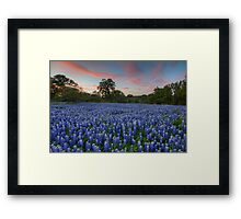Texas Bluebonnet Images - Evening in the Texas Hill Country 1 Framed Print