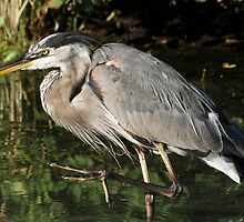 March of the heron by Heather King