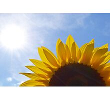 Sunflowers - End of Summer in London Photographic Print