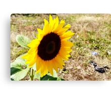 Sunflowers Lurking in London Canvas Print