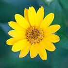 sunny flower by ma-fleur-art