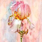 Bearded Iris in Pastels by MotherNature2