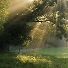 light through the trees by dc witmer
