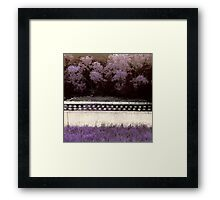 Sweet Summery Scent  Framed Print