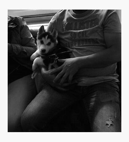 Dog on underground train  Photographic Print