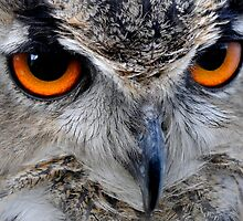 Eagle Owl Eyes by George Crawford