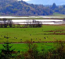 How Green Is My Valley...Coquille, Oregon by trueblvr