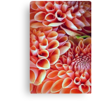 A Dalliance of Dahlias Canvas Print