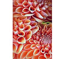 A Dalliance of Dahlias Photographic Print