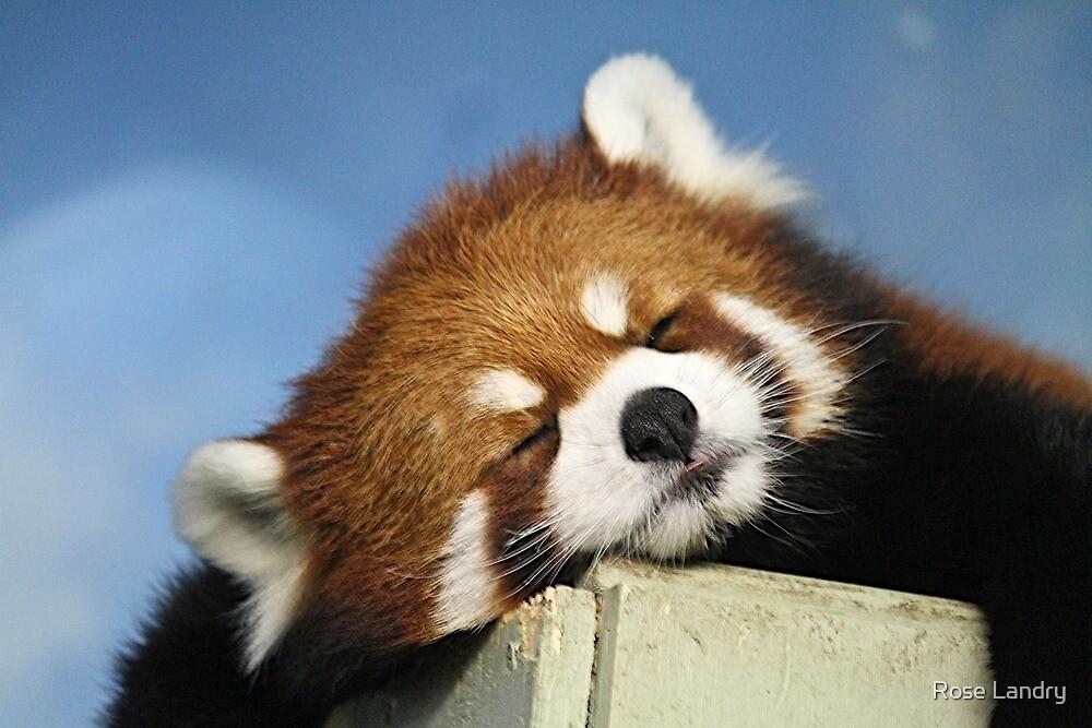 Red Panda Nap! by Rose Landry