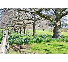 Spring at Ridgley Photographic Print
