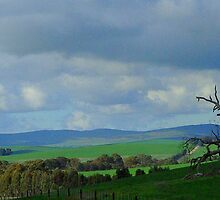 Country Fields, South Australia by imaginethis