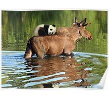 Taking a Ride on the Panda, err, um, Moose Express Poster