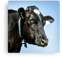 Black Cow Canvas Print