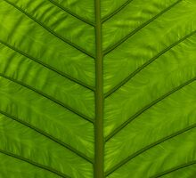 Tropical Green Leaf by visualspectrum