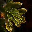 A leaf turns yellow by cclaude