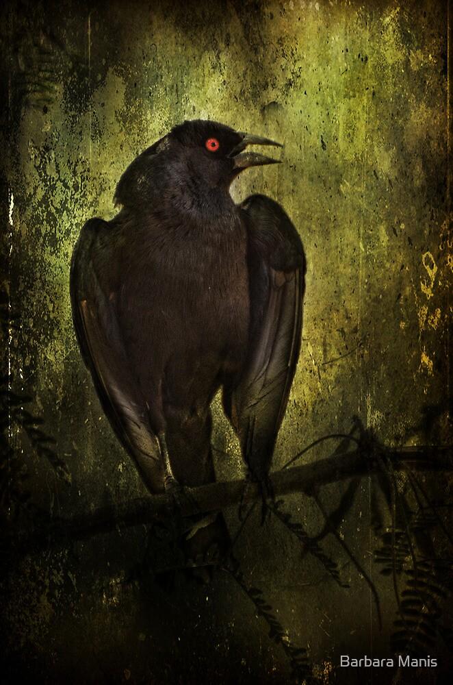 Orange-Eyed Bird by Barbara Manis