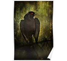 Orange-Eyed Bird Poster