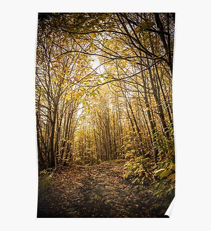 Per i boschi dell'Etna  Poster