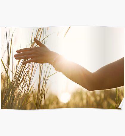 Female Hand Caressing High Grass Poster