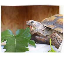 Hungry Turtle Poster