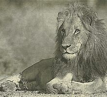 Sketch pencil portrait lion by leksele