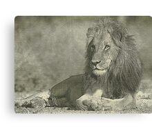 Sketch pencil portrait lion Canvas Print