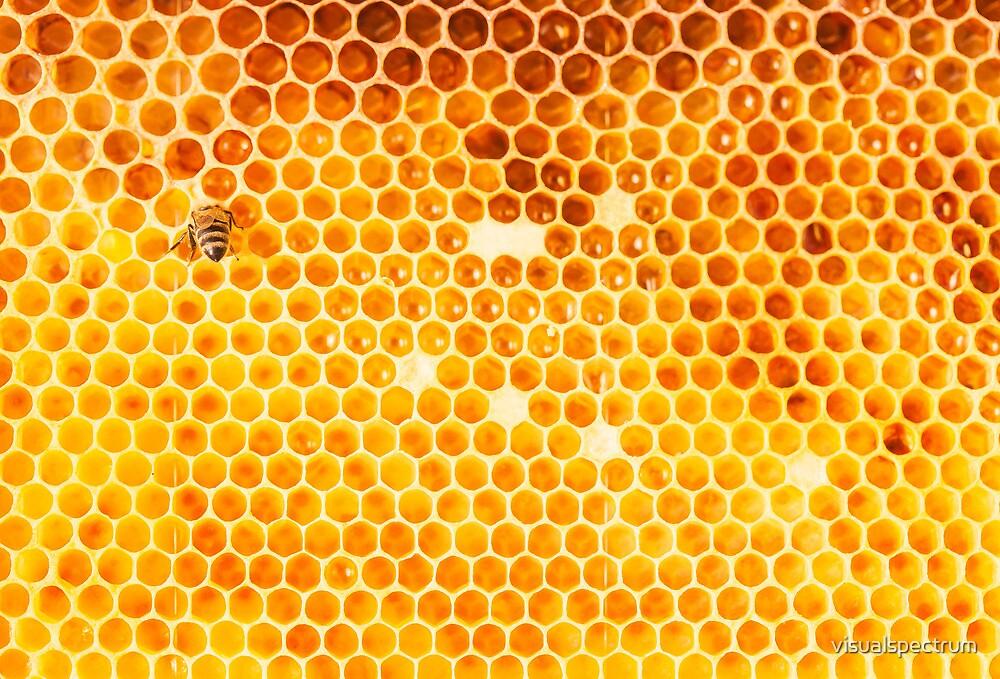 Honeycomb by visualspectrum