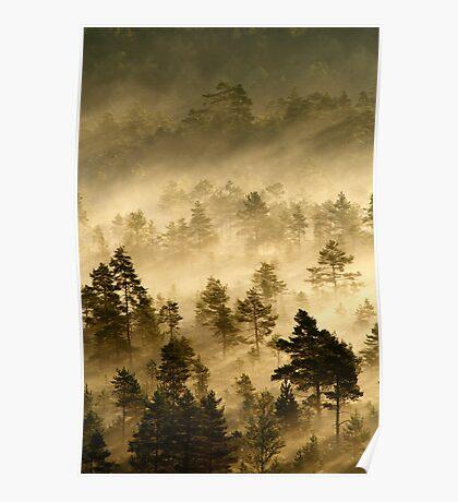 3.9.2013: Morning in Torronsuo National Park V Poster